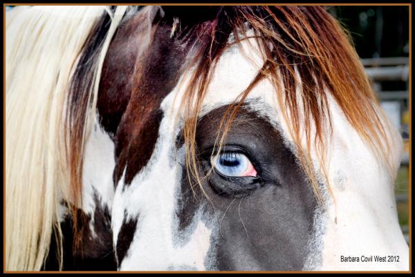 Bucking Horse Eye
